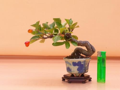 17110304 ミニ日本鎌塚