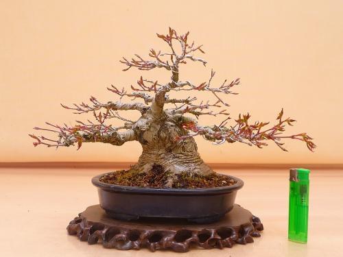 20032803 山紅葉