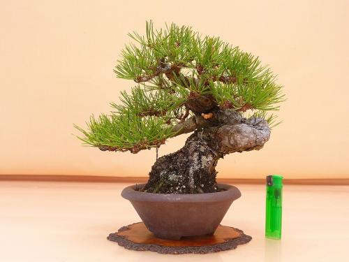 20041202 赤松