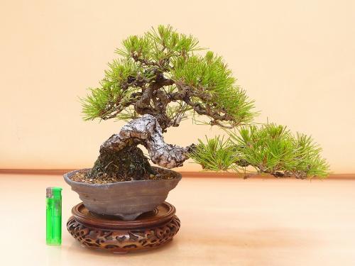 20052301 赤松