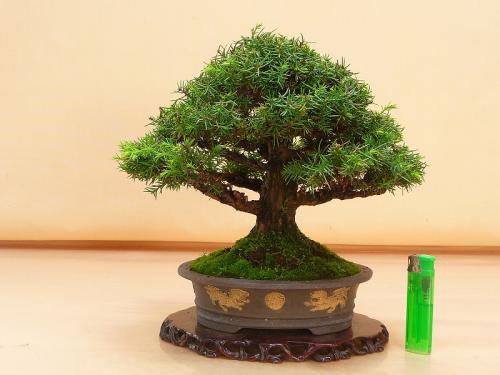 20080103 杉