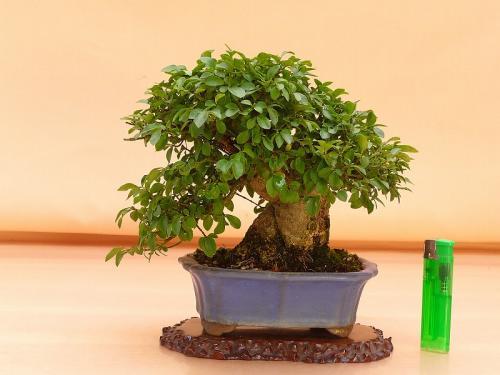 20091904 コマユミ